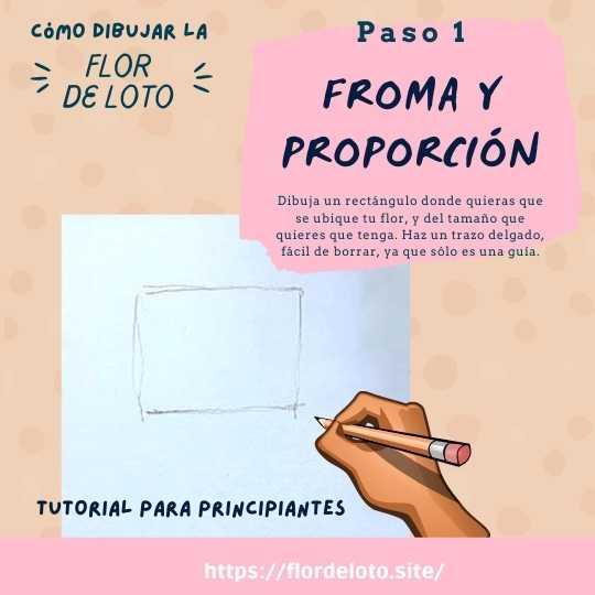 paso 1- dibujar flor de loto proporciones